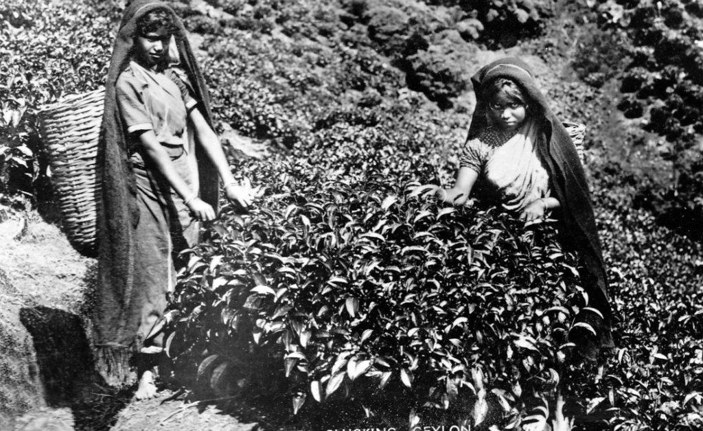History of Ceylon tea, Indian Tamils, Sirima - Shastri pact
