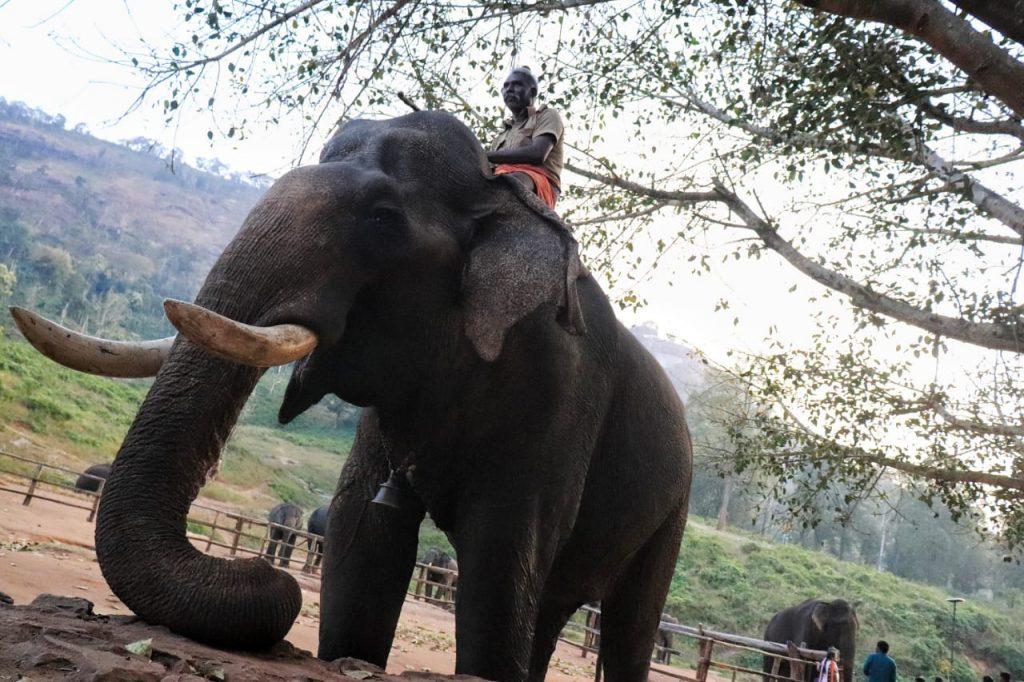 Anamalai tiger reserve kozhikamuthi elephants camp trains captive elephants