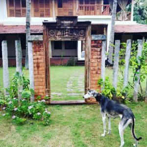 Bollywood star Kalki Koechlin shares her Tamilnaduhouse picture goes viral tamil