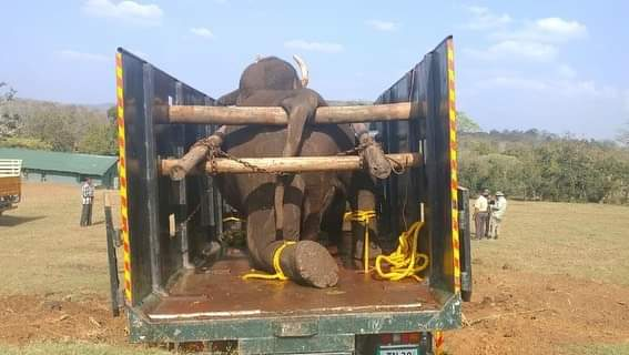 It felt like my personal loss says the caretaker of deceased elephant