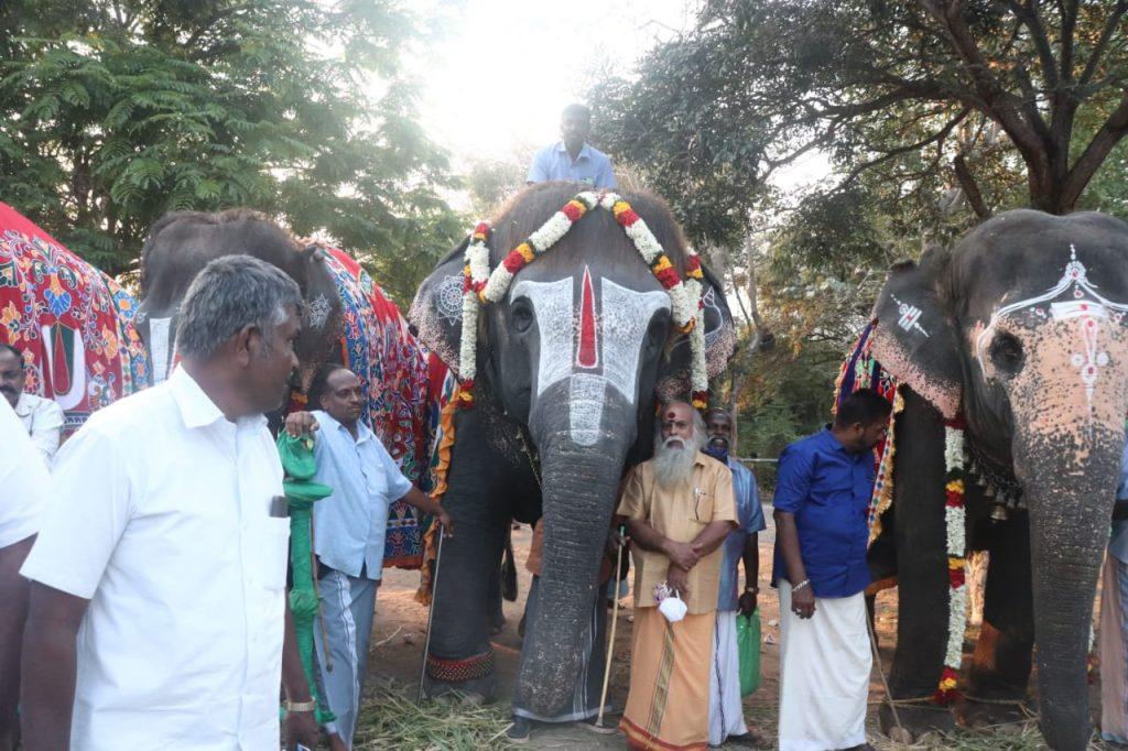 48-day retreat for temple elephants kicks off near Mettupalayam